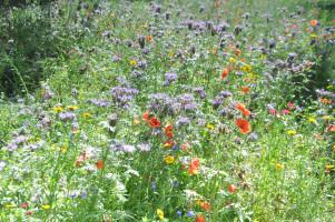 Die Blumenwiese am Friedensengel