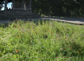 """Blumenwiese, im Hintergrund der """"Tempel"""" am Fuß der Säule"""